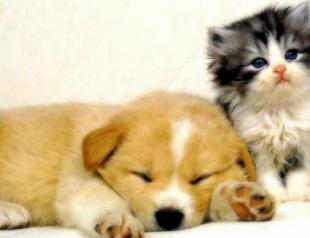 Фото котят и щенков повышают работоспособность