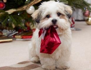 Что подарить домашнему питомцу на Новый год?