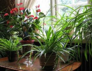 Пять растений, которые должны быть в каждом доме