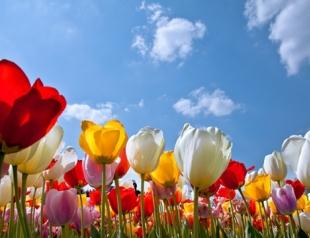 Майские праздники 2013 в Украине: куда поехать?
