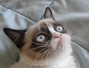 Вскоре выйдет первый в Голливуде фильм об интернет-котах