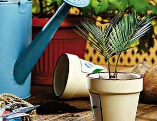 Как обеспечить полив домашних растений во время отпуска?