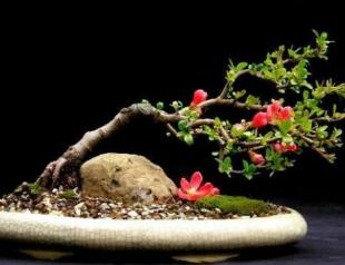 Искусство бонсай: практические советы