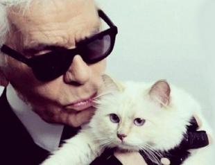 Кошка Лагерфельда рекламирует накладные ресницы