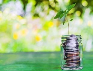 Это к деньгам: какие денежные растения стоит выращивать дома