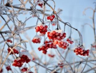 Михайлов день 21 ноября: трогательные поздравления в стихах и прозе, а также красивые открытки с праздником