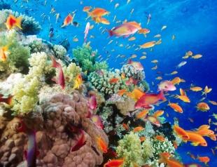Эксперты назвали стоимость Большого Барьерного рифа: цена впечатляет!