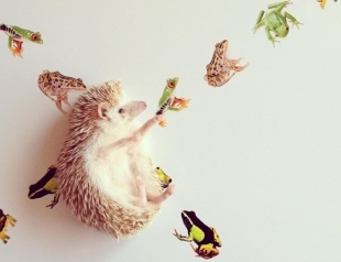 Instagram-аккаунты животных, которые популярнее тебя