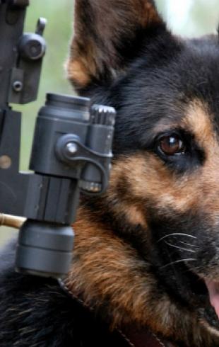 Четвероногие солдаты: собаки в армии