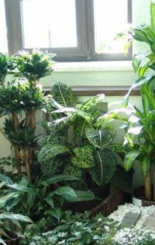 Как обеспечить полив домашним растениям в отпуске