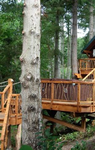 Можно ли жить на дереве: 3 дома-гнезда