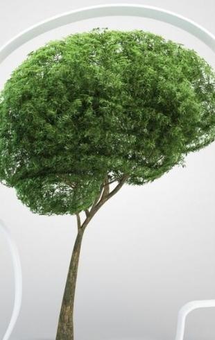 Какие растения нельзя держать дома: скрытая угроза здоровью