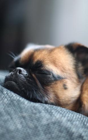 Как избавиться от запаха псины в квартире: 9 проверенных способов