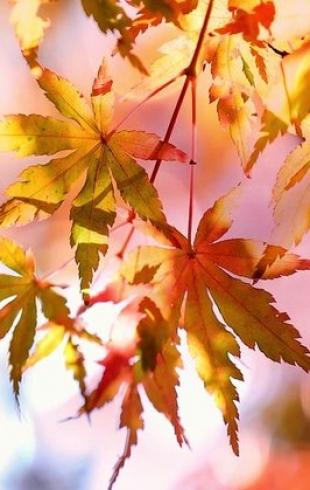 23 сентября  — День осеннего равноденствия 2018: приметы и суеверия