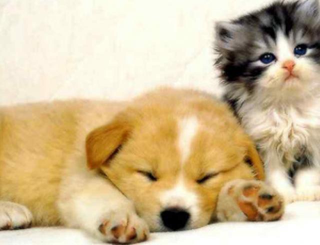 Советы по уходу за домашними животными