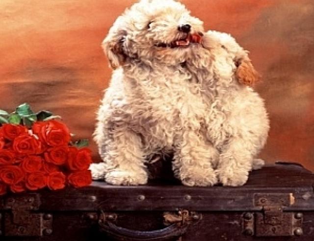 Собака в поезде – новые правила