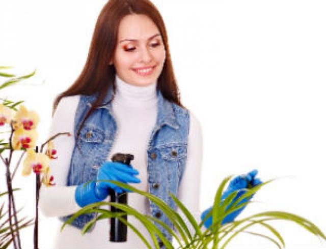 Пришло время пересадки комнатных растений