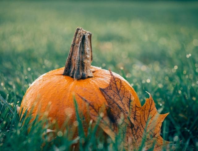Прикольные смс на Хэллоуин-2018: поздравления с самым страшным праздником в году