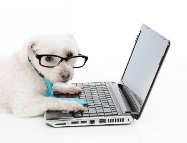 Топ 10 рекламных роликов с участием собак