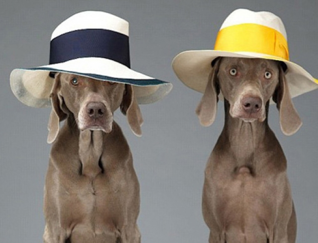 Собаки стали моделями в рекламной кампании Acne