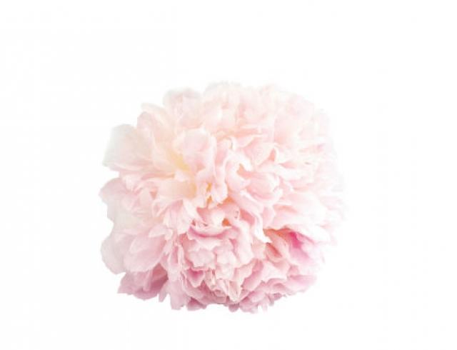Davidoff представит новый аромат Cool Water Sea Rose