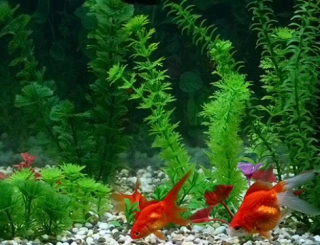 Первый аквариум: каких жильцов выбрать?