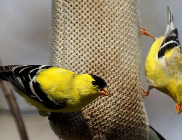 Экзотические животные в доме: птицы