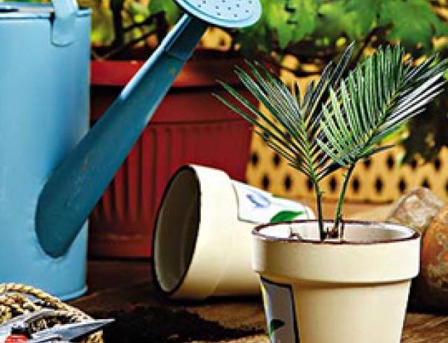 Пересаживаем весной комнатные растения