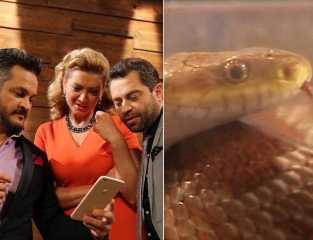 Скандал на Мастер Шеф 6: воспитатель змеи, убитой на проекте, в шоке от жесткого обращения с животными