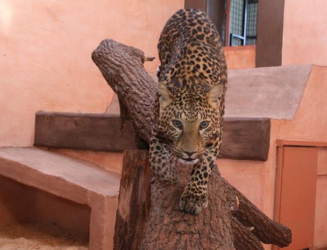 Зоопарк «ХІІ месяцев»: зачем брать с собой купальник?