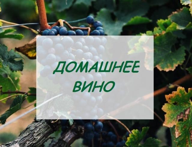Вино без одуванчиков: готовим домашнее вино