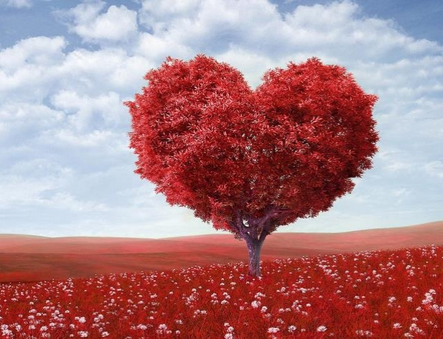 Как заботиться о сердце: полезные продукты, двигательная активность и обследования