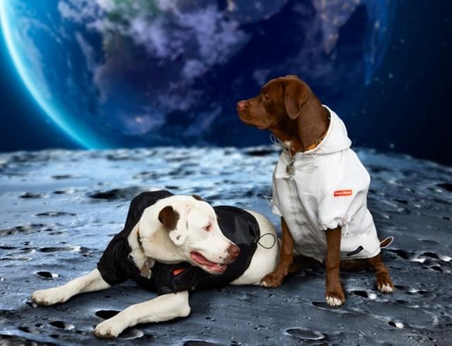 """Четвероногим модникам очень повезло: Heron Preston и NASA выпустили """"космическую"""" коллекцию одежды для собак"""