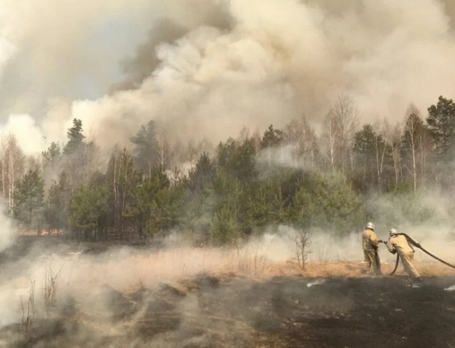 Пожар в Зоне отчуждения: как помочь Чернобылю?